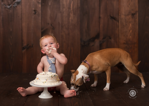 Cake smash dog.jpg